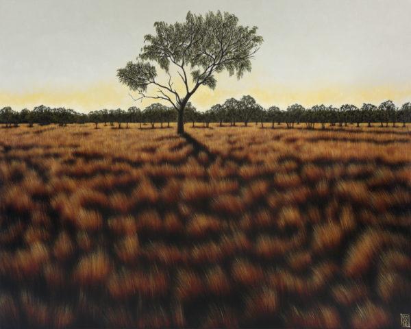 Amoonguna landscape IV (tree shadow)-web