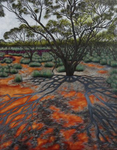 Kokatha Tree Shadow