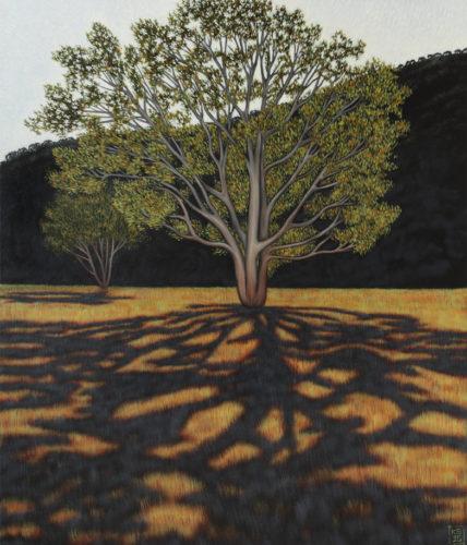 Arboris umbra